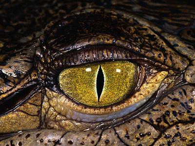Two-headed monster snake scares Ukrainian zoo visitors