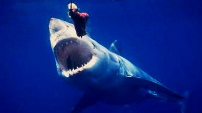 New shark attack – Russian Far East 'no swim zone' again