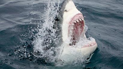 Jaws no more: Australia to kill sharks