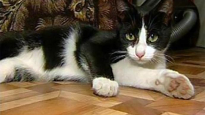 Rescue cat gets Emergencies Ministry award