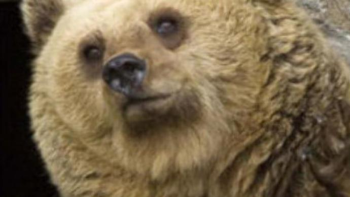 Romania:  Bear mauls U.S. tourists, 1 dead (CNN.com)