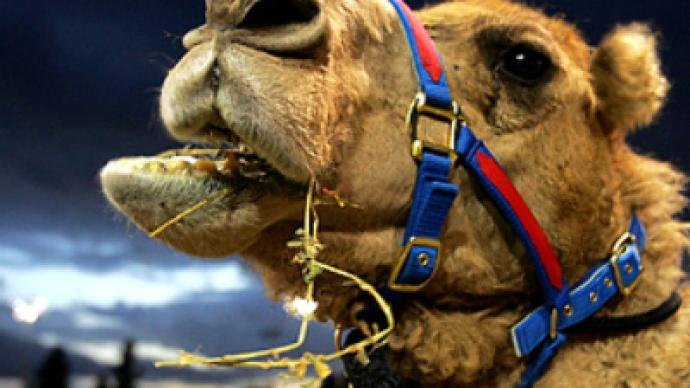 Bordering on déjà vu – Ukraine blocks Russian camels from entering the country