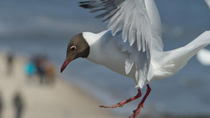 Angry Birds: Argentina to shoot seagulls to save whales