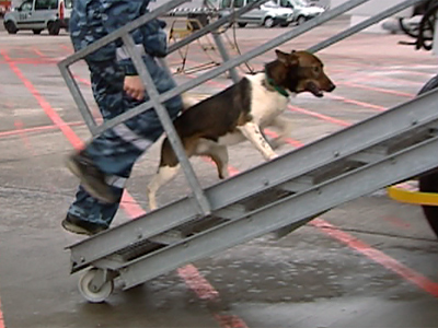 ParCool: Roofs and walls no obstacle for daredevil doggy