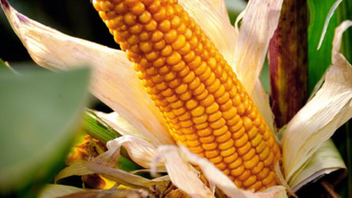 Good crop, bad crop: French scientists dismiss Monsanto 'cancer corn' study