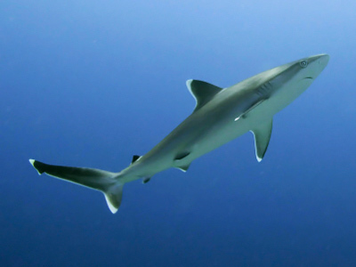 Two-meter shark netted near kids' camp