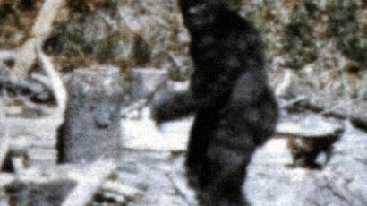 Watch rare Russian Yeti bear do Kung-Fu (VIDEO)