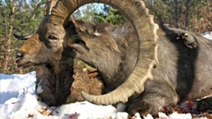 Skins and skulls of rare animals confiscated in Domodedovo