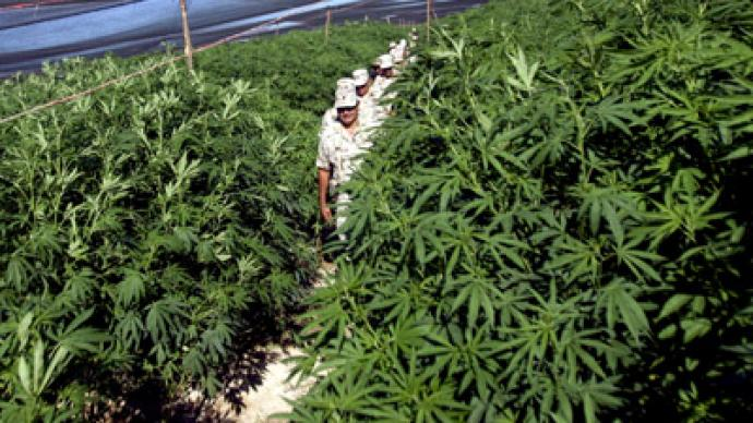 Up in smoke:  Eurozone crisis pushes Spanish town to harvest pot
