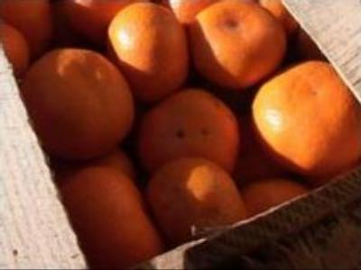 Tangerines in tug-of-war at Russia-South Ossetia border