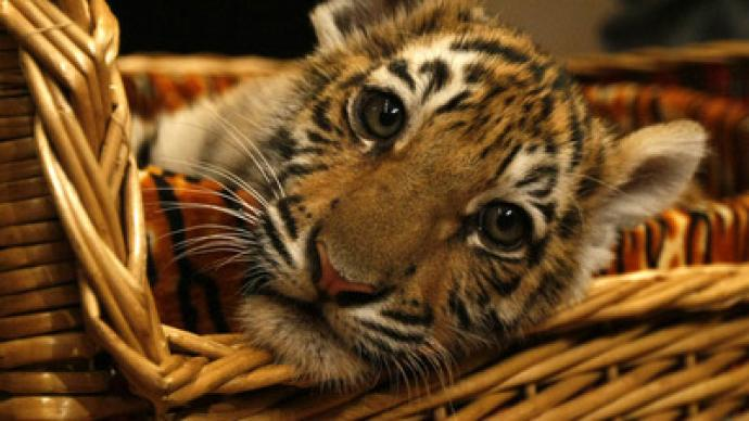 Urals woman gets to keep her pet tiger