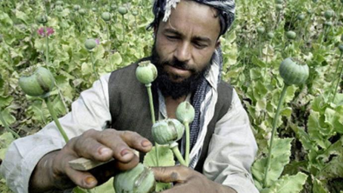 """If we destroy opium poppy fields, farmers will join the Taliban"""