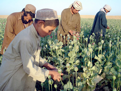 Filthy lucre: Afghan drug profits too juicy to resist