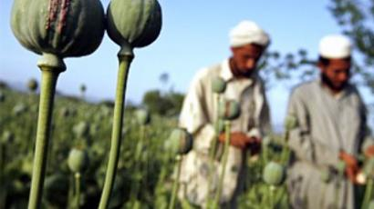 Illusions versus reality: NATO and Afghan opium
