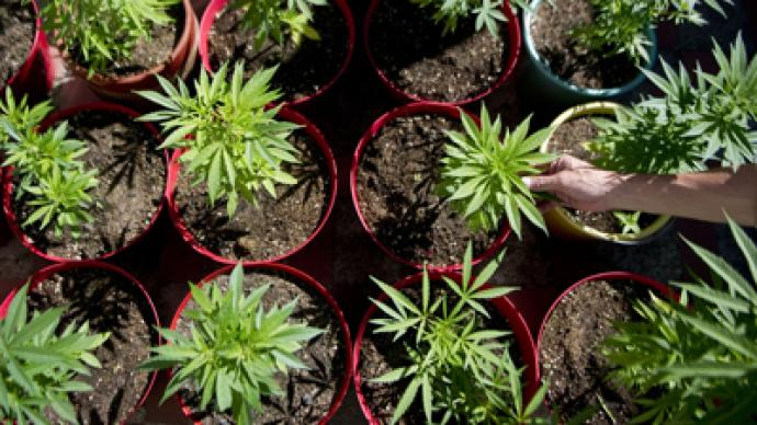 Obama administration considering ways to overturn marijuana legalization in Washington and Colorado