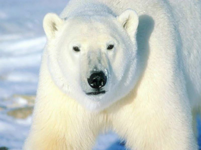 Polarbeargate father must take polygraph test