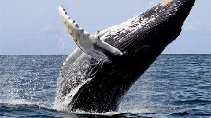 Scientists baffled by spontaneous whale