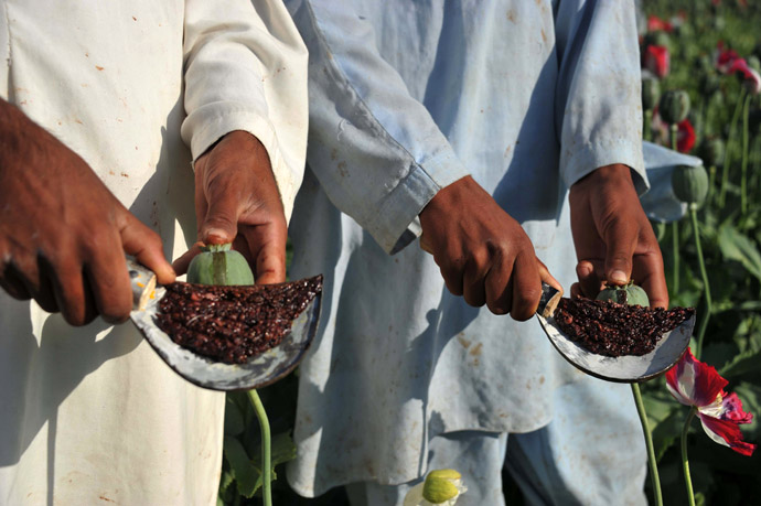 Afghan farmers collect raw opium as they work in their poppy field in Khogyani District of Nangarhar province on April 29, 2013. (AFP Photo)