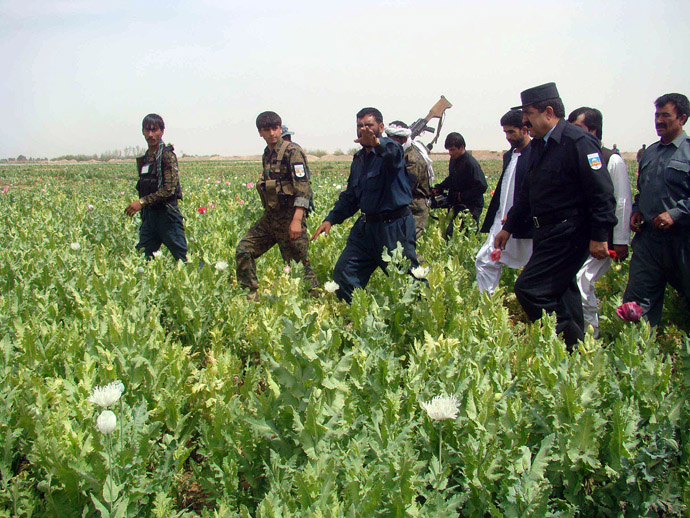 fghan policemen destroys a poppy field in the Nad-e Ali district of Helmand province on March 20, 2013. (AFP Photo)