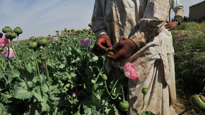 Poppy revolution in Afghanistan to follow the elections?