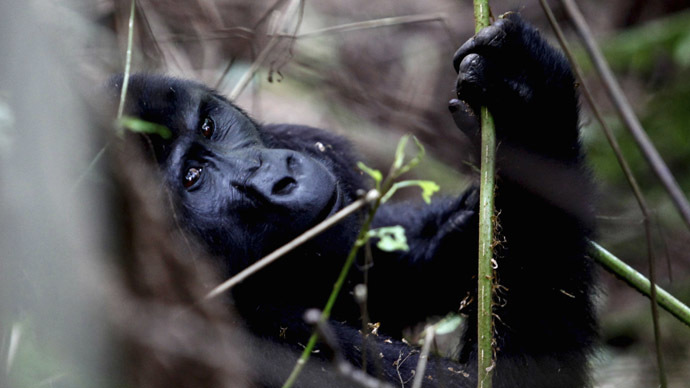 The world's wildlife in peril and it's time for urgent action