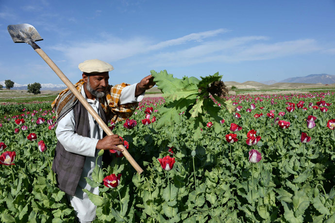 An Afghan farmer works in a poppy field on the outskirts of Jalalabad, capital of Nangarhar province (AFP Photo / Noorullah Shirzada)