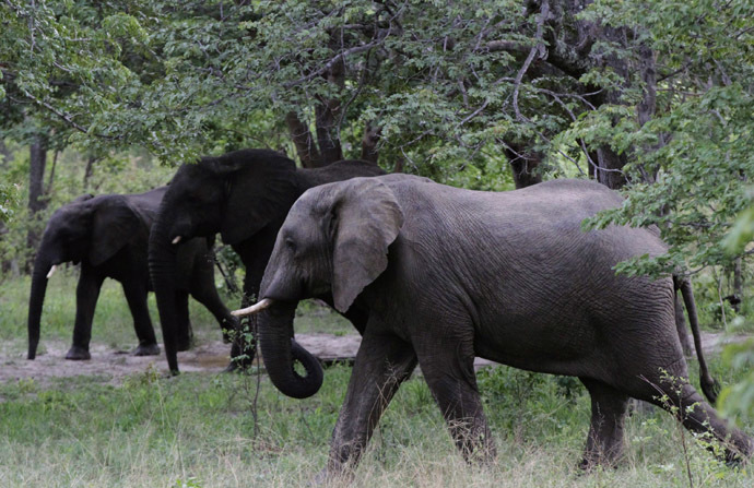 Elephants walk inside Zimbabwe's Hwange National Park. (Reuters/Philimon Bulawayo)