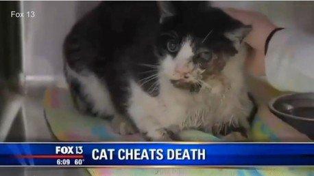 Un chat zombie rentre à la maison cinq jours après ses funérailles