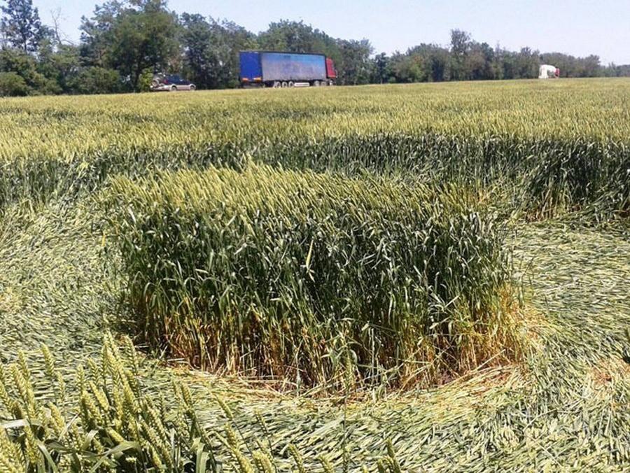 D'étranges cercles apparaissent dans un champ russe