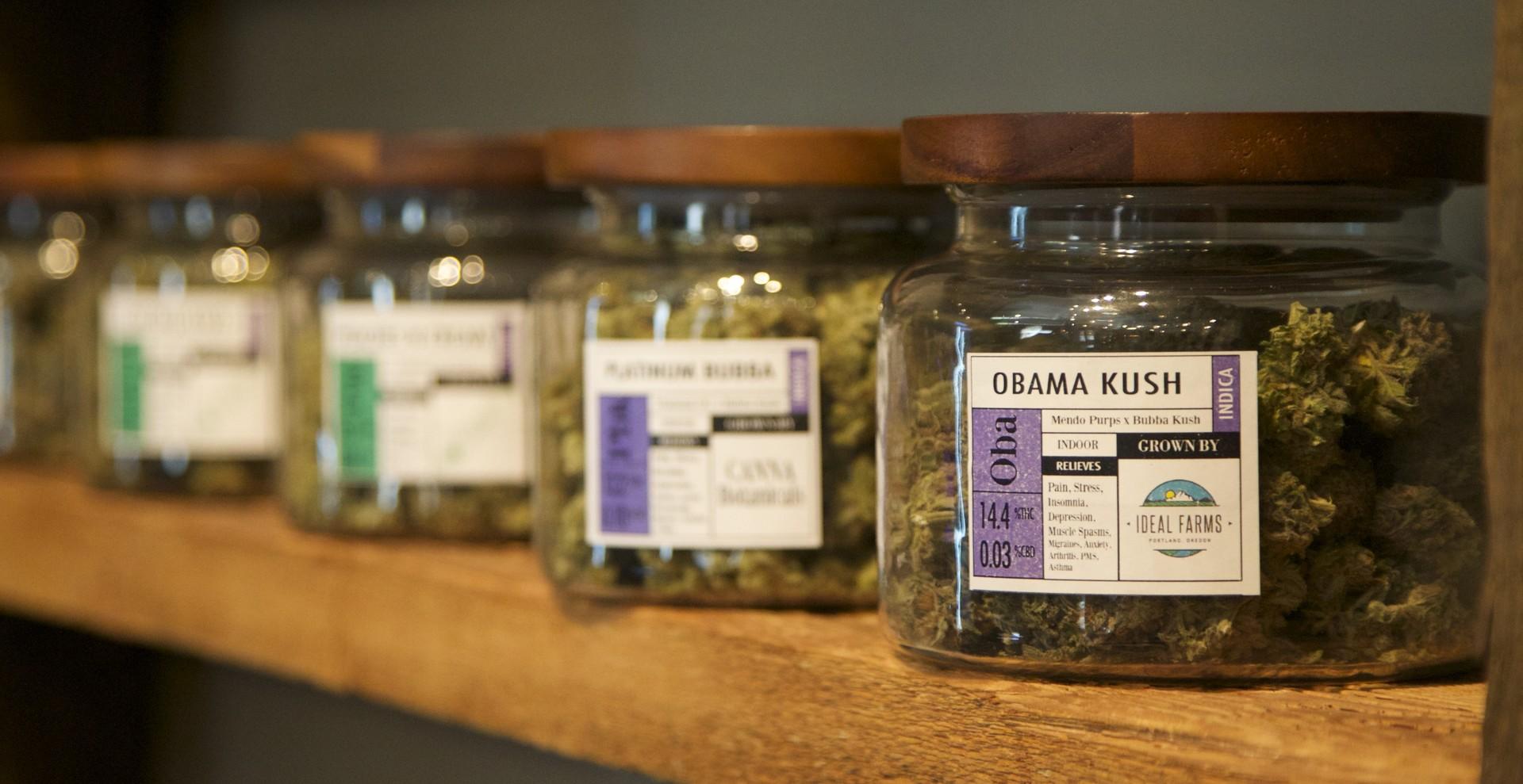 du cannabis médical dans un dispensaire de Portland (Oregon, Etats-unis)