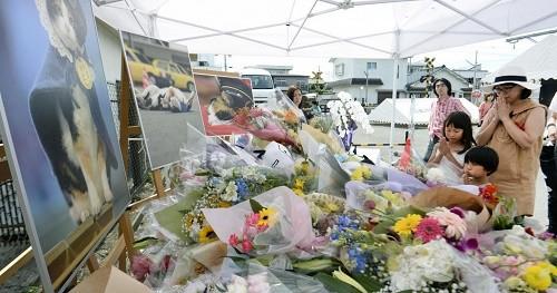 3000 Japonais ont assisté aux funérailles de leur chat préféré, Tama !
