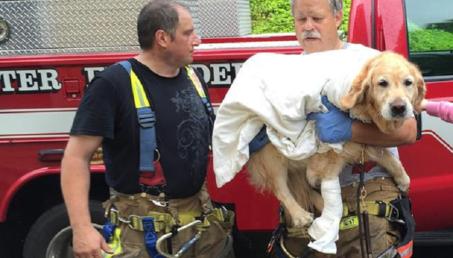 Un chien sauve sa maîtresse et devient un héros des réseaux sociaux (VIDEO)