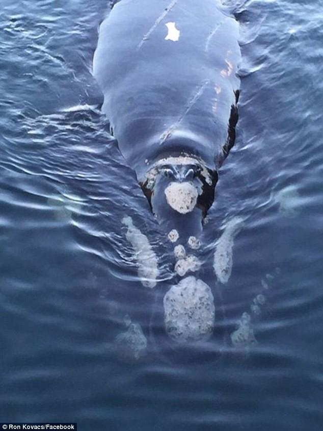 Une baleine cherchant de l'aide pour retirer des sacs en plastiques arrivent vers des jeunes pêcheurs