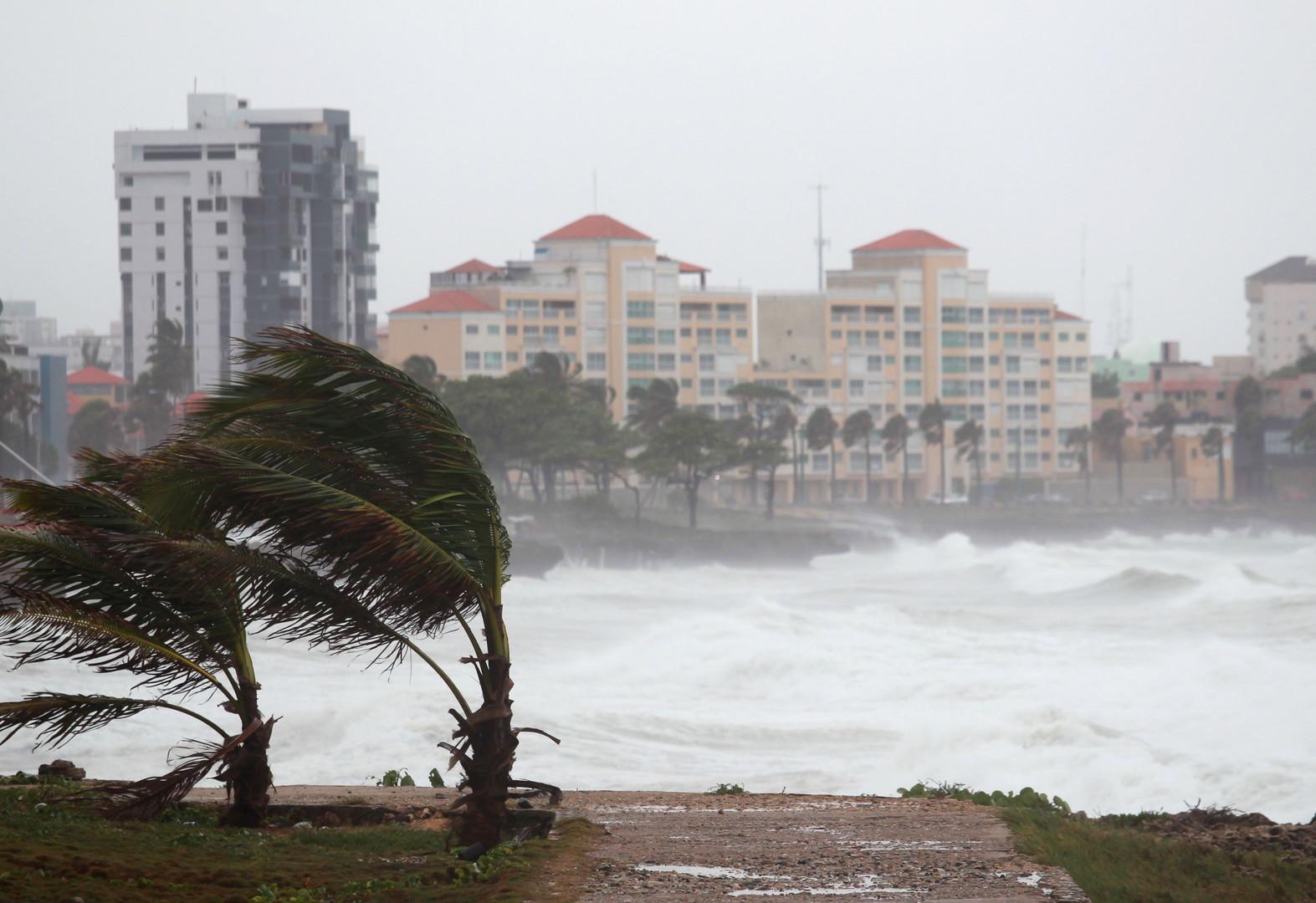 Les palmiers sur les côtes de Saint-Domingue