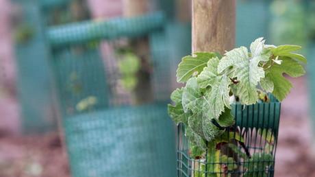Opposés aux OGM, 80 «faucheurs volontaires» envahissent l'Inra de Colmar