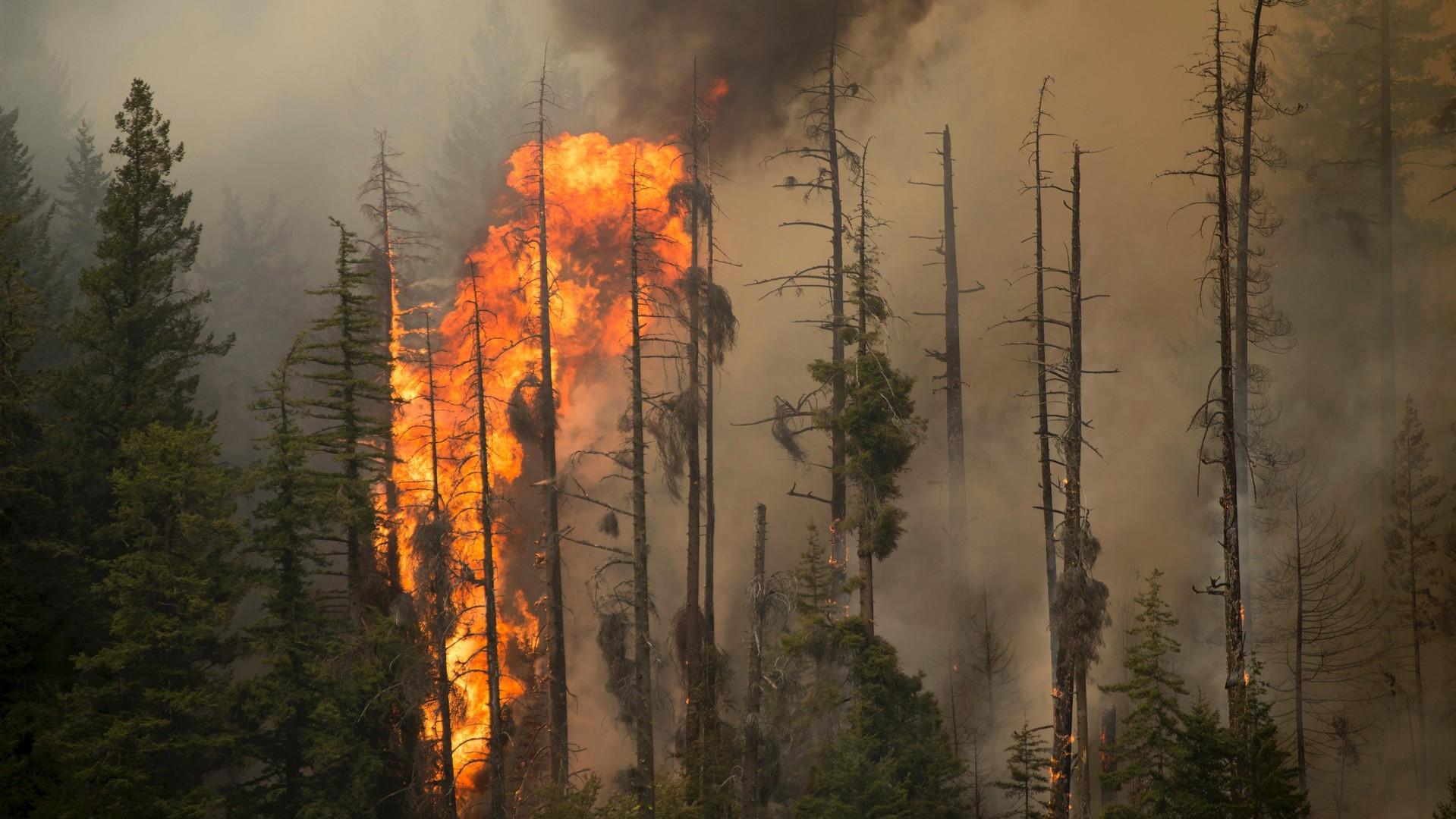 Des feux de forêt font rage dans l'Etat de Washington