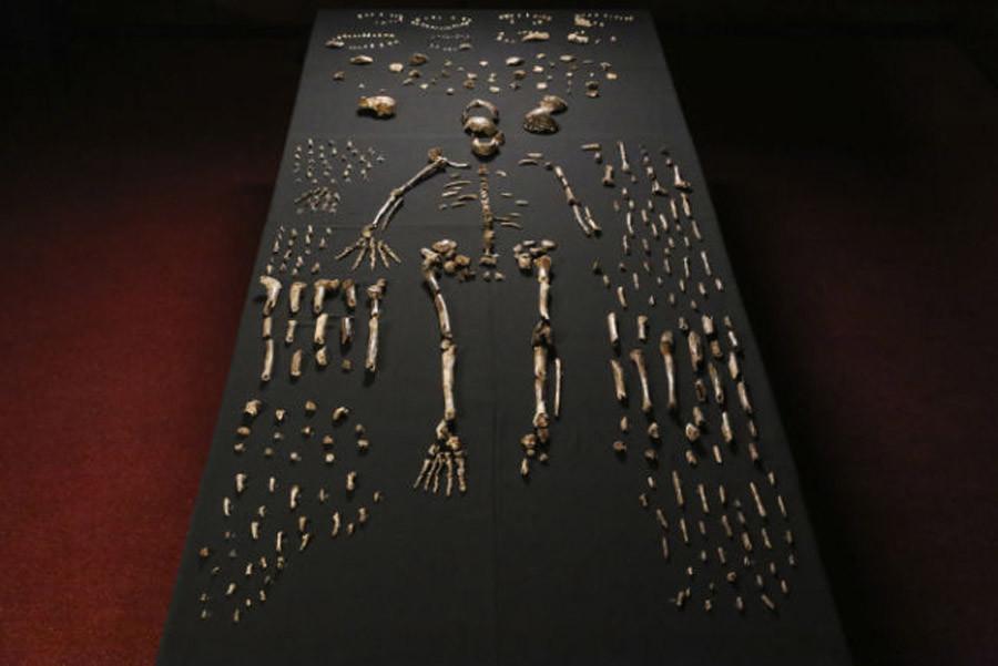 «Un cerveau minuscule, un corps svelte» : une nouvelle espèce humaine découverte en Afrique du Sud