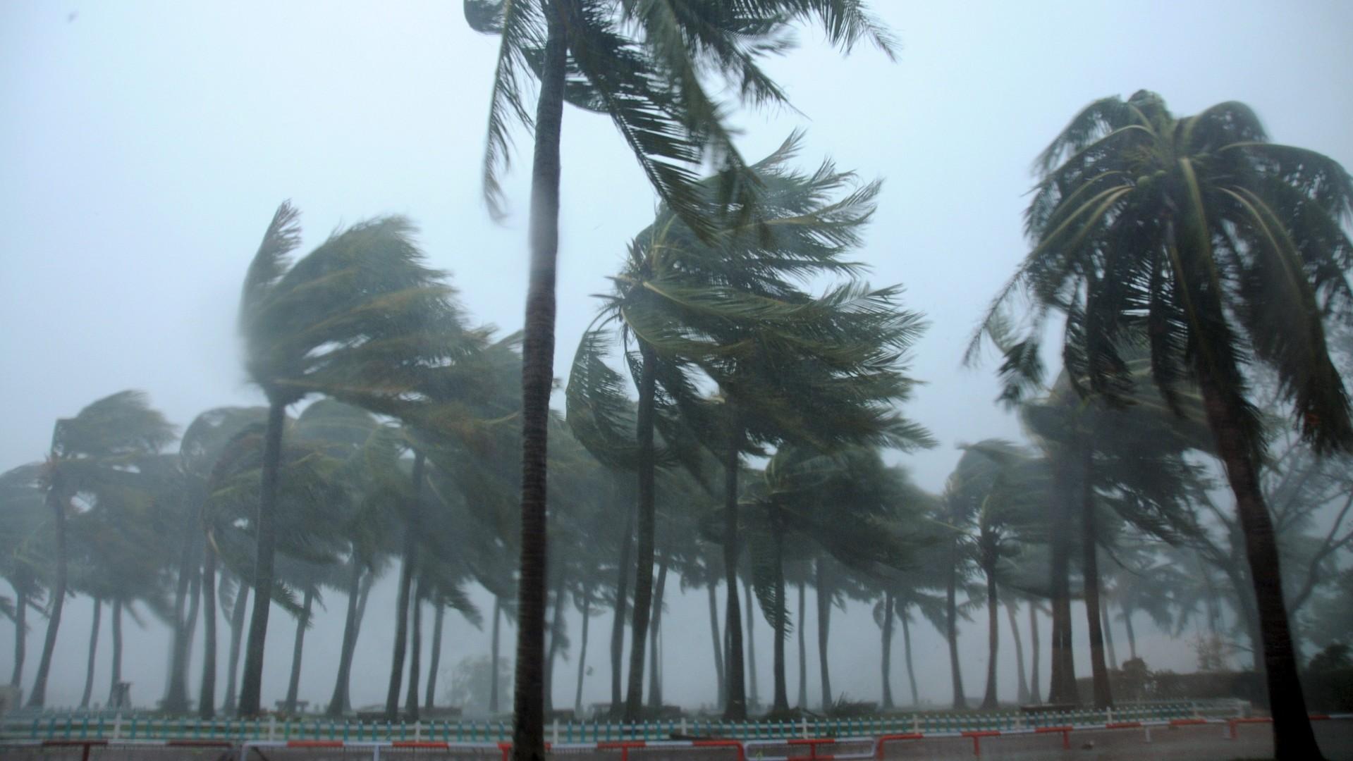 Des palmiers ont été abattus par le typhon Mujigae dans les rues de la ville de Zhanjiang en Chine