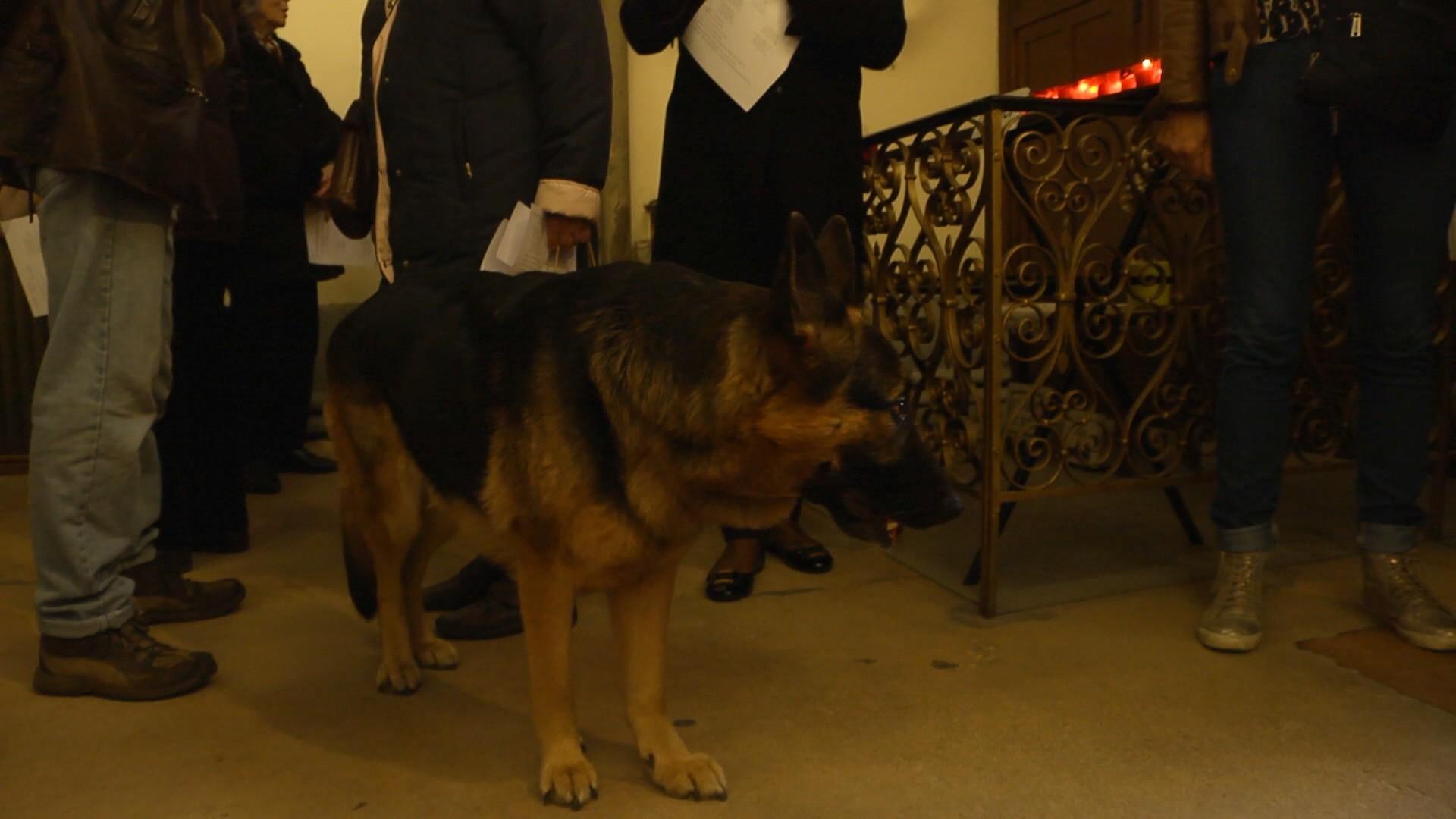 Quelques chiens étaient présents pour assister à la messe dans l'église célébre pour ses bénédictions d'animaux