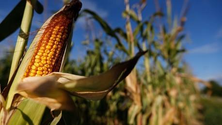 Deux tiers des pays européens rejettent les OGM