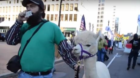 Des milliers d'activistes anti-TTP et… un alpaga manifestent aux Etats-Unis