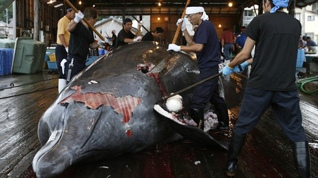 Contre le massacre des baleines, Anonymous pirate le site du Premier ministre japonais