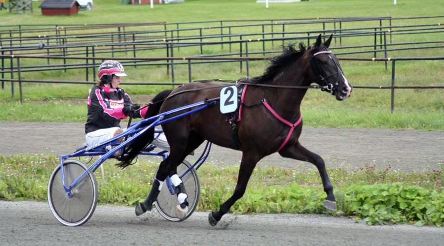 Une cavalière suédoise justifie le fait d'avoir mangé son propre cheval sur Facebook
