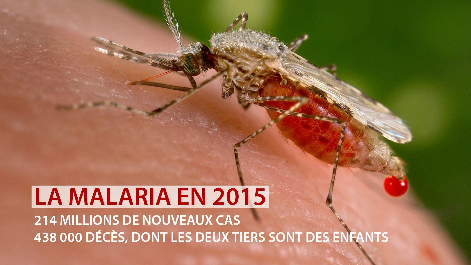 Bill Gates et le Royaume-Uni investiront 4 milliards d'euro pour éradiquer le paludisme