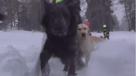 Des chiens d'avalanche mis à l'épreuve en Autriche
