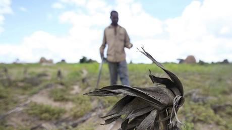 Zimbabwe : le gouvernement déclare l'état de catastrophe naturelle suite à une grave sécheresse