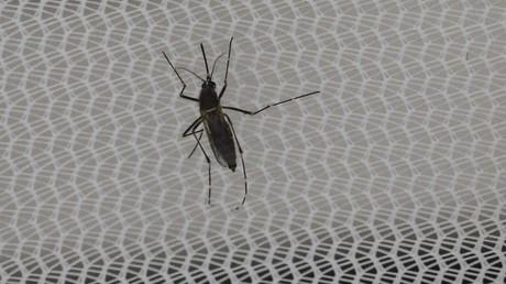 Un premier cas de transmission du Zika par voie sexuelle en France annoncé par Marisol Touraine