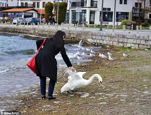 Macédoine : une touriste tue un cygne pour prendre un selfie avec lui