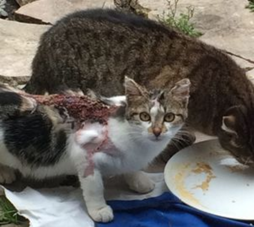 A Bagnolet, certains s'amusent à brûler des chats à l'acide (PHOTOS CHOC)