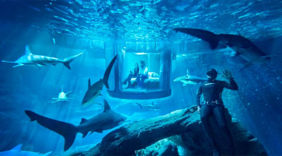 Une nuit avec des requins à Paris : une offre d'Airbnb qui glace le sang